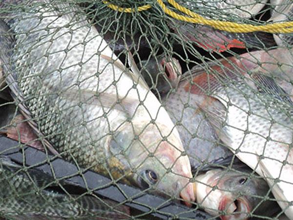 acquaculture2